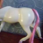 former cavallo